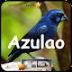 Canto de Azulao for PC-Windows 7,8,10 and Mac