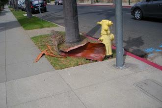 Photo: Palm frond down Santa Barbara 2012