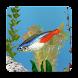aniPet淡水魚水族館ライブ壁紙