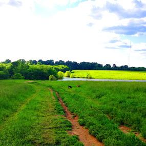 by Josh Pingel - Landscapes Prairies, Meadows & Fields