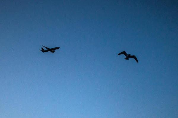 volare  di Navarro