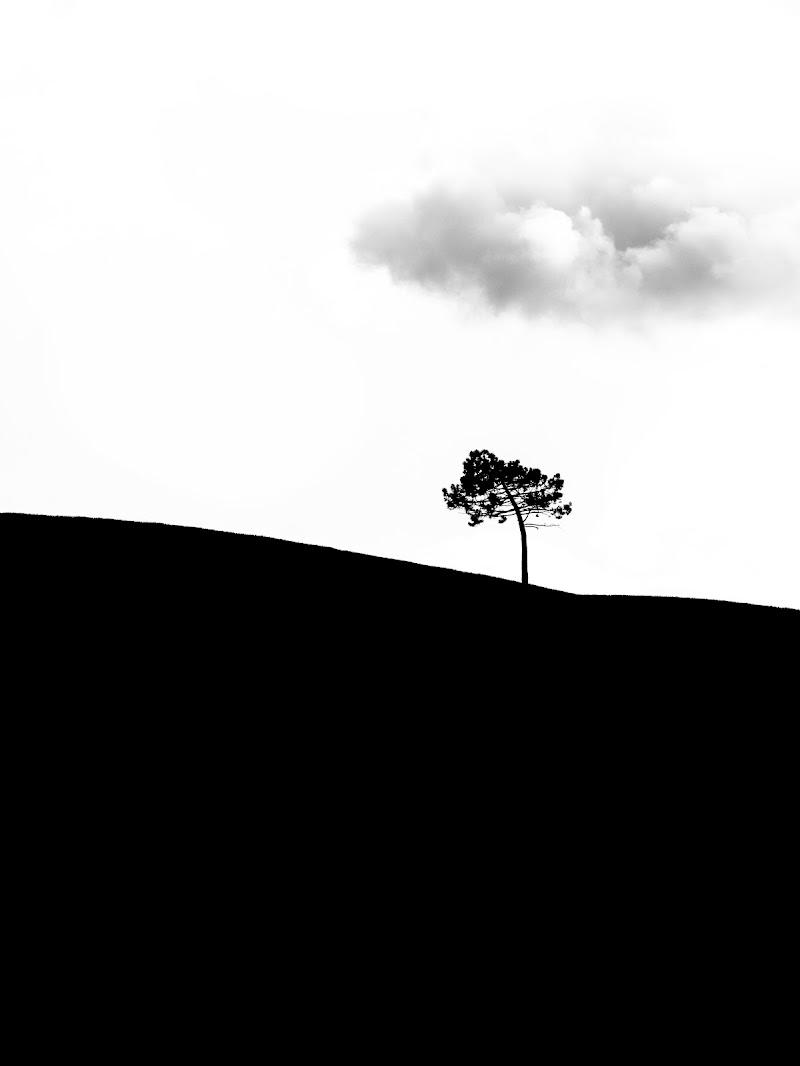 L'albero del filosofo di VIC61