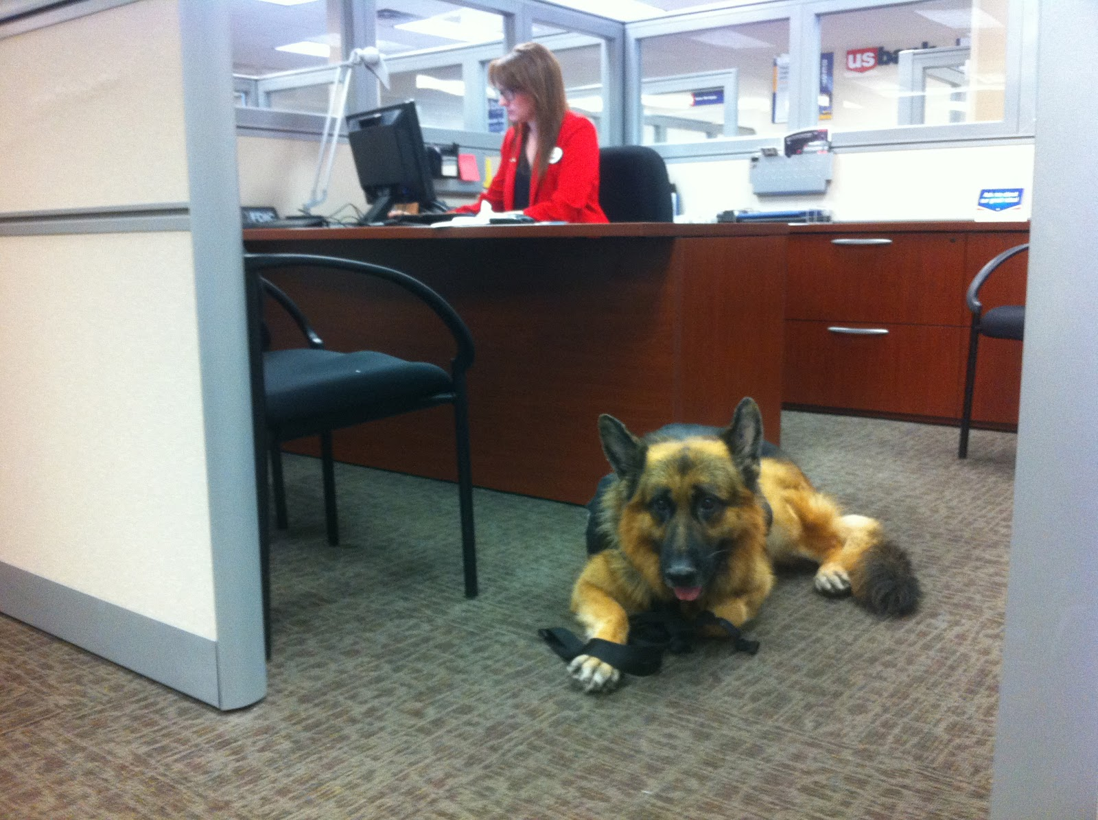 motivating staff in your small business by allowing employees to take pets to the office