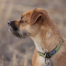 """BUG"" by Scott Thomas - Animals - Dogs Portraits ( nature, mammal, animal, dog, pet )"