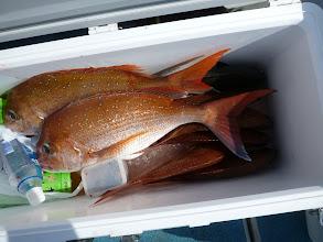 Photo: クマガイさんの釣果です。 真鯛21匹でした!