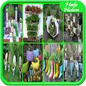 DIY Garden Design Ideas icon