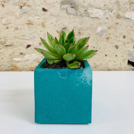 pot en béton coloré bleu turquoise avec succulente