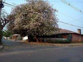 Photo: 住宅街も大きな木がたくさんで癒される