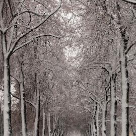 Illustration by J & M - City,  Street & Park  City Parks ( winter, illustration, image, view )