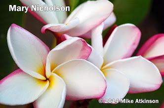 Photo: Mary Nicholson - San Diego, CA - East San Diego county