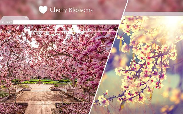 Cherry Blossom HD Wallpapers New Tab Theme