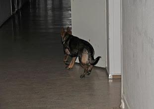 Photo: Bayla søker i sykehuskorridorene