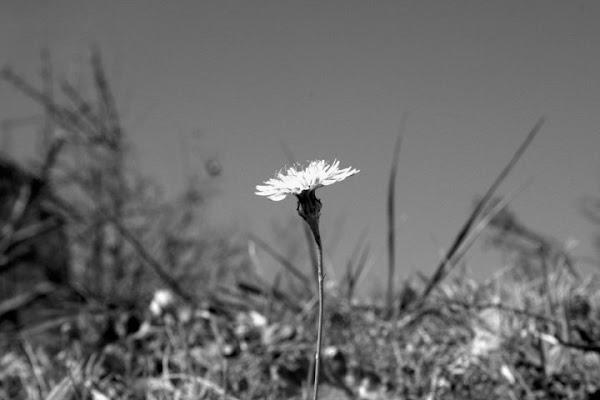 Alone... di sevass