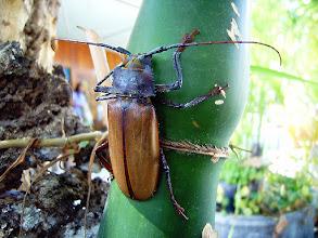 Photo: Bamboo Bug #MacroMonday  Photography by Justin Hill ©