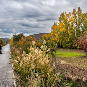 On the road by Jesús Sánchez Ibáñez - Landscapes Prairies, Meadows & Fields