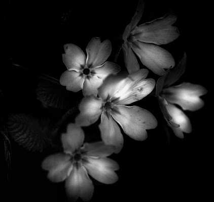 Dark Side Of Beauty di stefano_serra