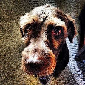 by Katie Schmitt - Animals - Dogs Portraits ( , #GARYFONGPETS, #SHOWUSYOURPETS )