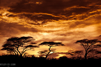 Photo: Heading Out on Safari  Today I fly out for Kenya, on a 19 day trip through some of the most fantastic wildlife and scenery in Kenya and Tanzania! I'm guiding 10 lucky people with two local guides to sharpen their photo skills and get the most inspiring shots!  I don't know how well connected I will be to the internet but I will try and keep you all posted on happenings and sightings that we encounter!  I may only have enough bandwidth for quick twitter updates in which case you can follow @kylefoto at http://twitter.com/kylefoto  I can't wait to show you the pics when I'm back!
