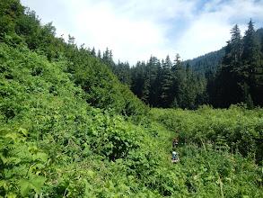 Photo: Walking through the lush vegetation