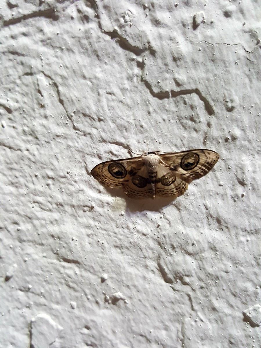 Moth greece