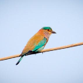Bird by Roshan Tabasum - Animals Birds ( bird )