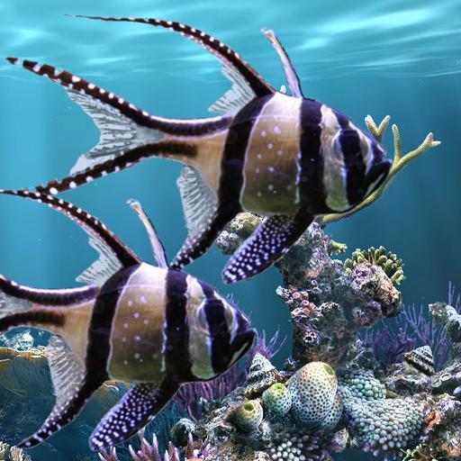 The real aquarium - Live Wallpaper