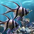 The real aquarium - Live Wallpaper APK
