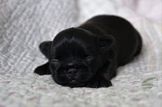 Photo: Female 11 days old