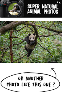 Super Natural Animal Photo - náhled