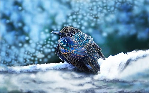 Winter Birds Live Wallpaper - náhled