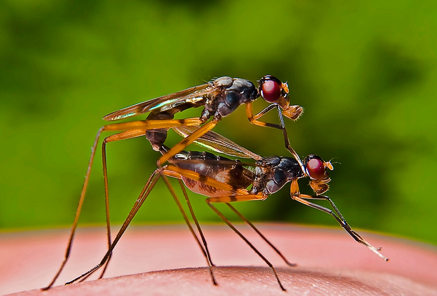 True LOVE by Woe Hendrik husin - Animals Insects & Spiders