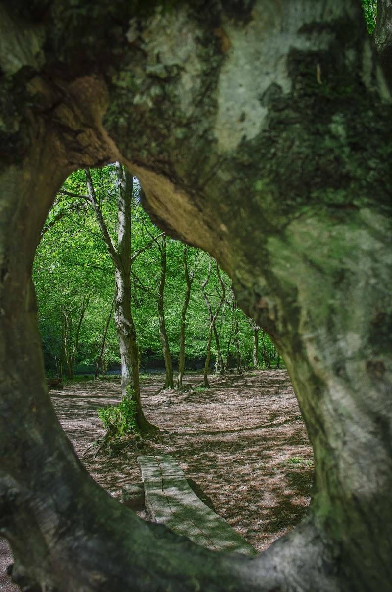 Oltre L'albero  di Simo Foto