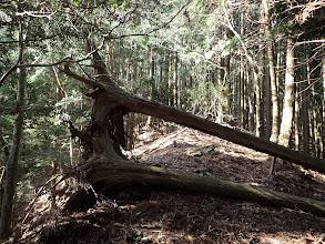 立ちはだかる倒木