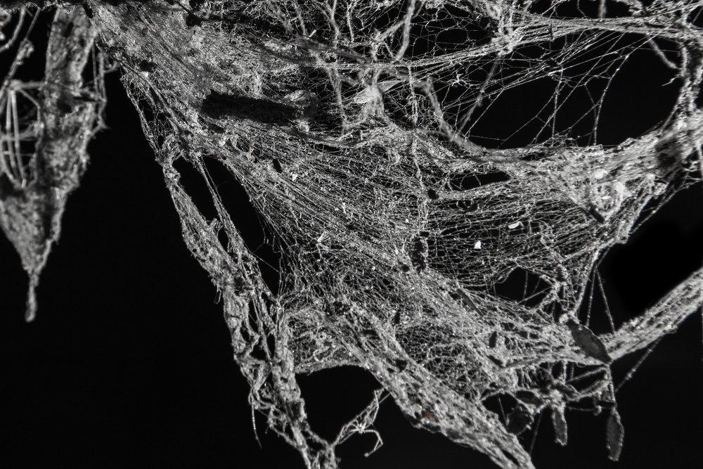 Image result for cobweb