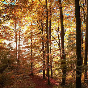 Colours of autumn by Helga Be - Nature Up Close Trees & Bushes ( am starnberger see )