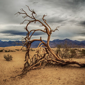 Mesquite by Richard Michael Lingo - Nature Up Close Trees & Bushes ( death valley, tree, nature, california, mesquite,  )