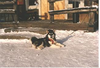 Photo: Sinni ALMA talvipäivillä -92