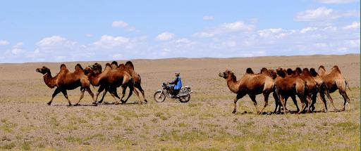 raid mongolie