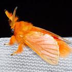 Flannel Moth