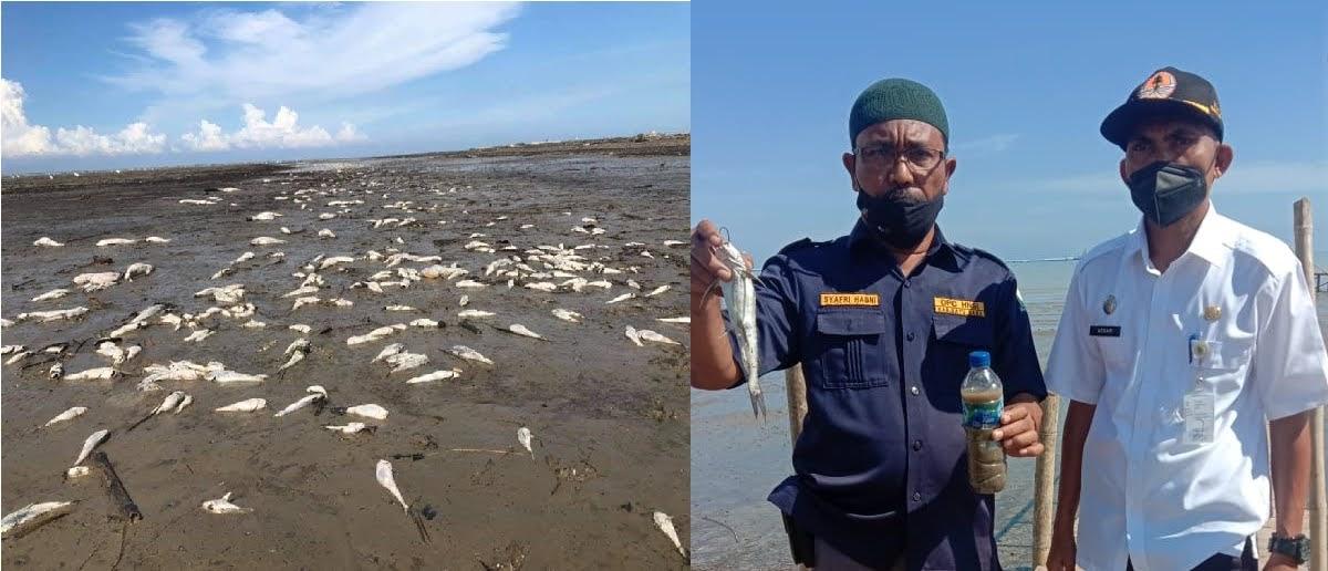 Terdamparnya Ribuan Ekor Ikan di Pantai Datuk Membuat Heboh