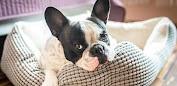 Pet Booking - Banho e tosa, consulta veterinária Εφαρμογές (apk) δωρεάν download για το Android/PC/Windows screenshot