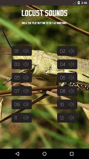 Locust Grasshopper sounds