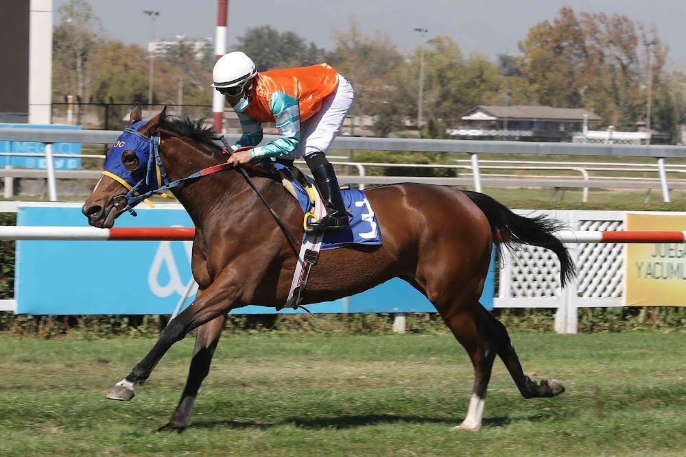 Nenufar Azul (Lookin At Lucky) conquista Condicional (1600m-Pasto-CHS).