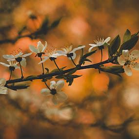 by Hendrik Mändla - Nature Up Close Trees & Bushes