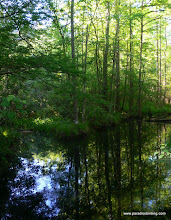 Photo: Bottomland at Martin Dies State Park, East Texas