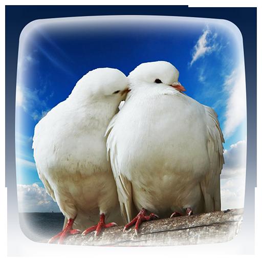 Dove Live Wallpaper