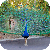 Peacock Feather Photo Frames