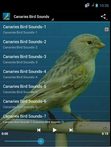 Canaries Bird Sounds