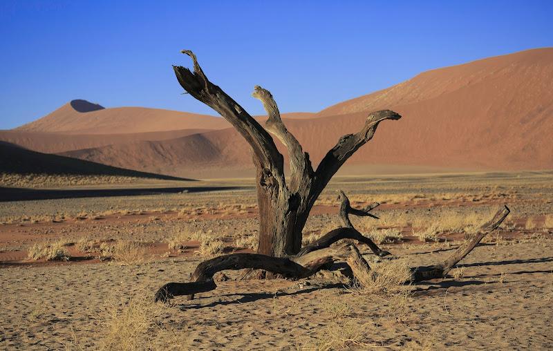 Deserto del Namib di codadilupo
