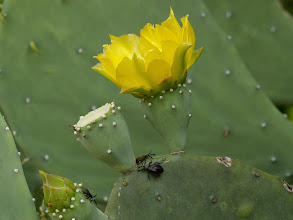 Photo: Beetlejuice